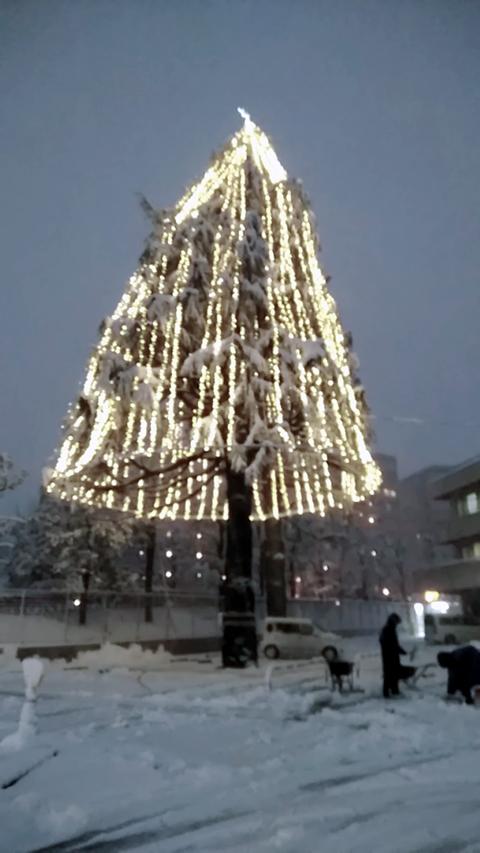 雪化粧のヒマラヤスギ